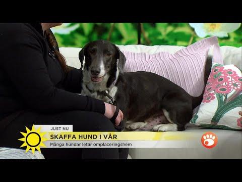 """Hundstallets vädjan: """"Tänk på att det finns hundar som letar efter ett nytt hem"""" - Nyhetsm"""