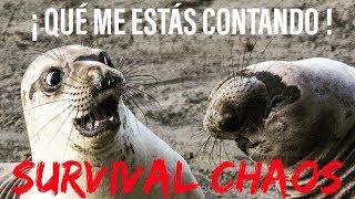 Survival Chaos en Español - ¡PERO QUÉ ME ESTÁS CONTANDO! | Warcraft 3 | WarBoss