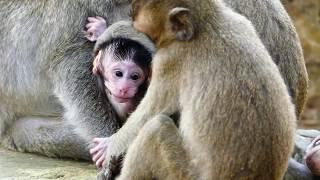 Wow! So cute newborn Janet! Most cute newborn monkey in the world & so lovely