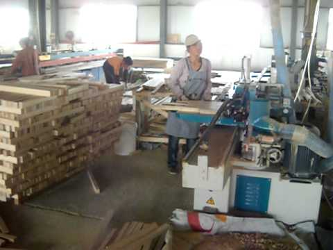 Final Plywood factory and Paulownia 042