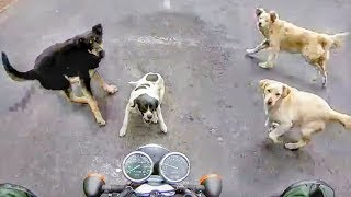Stupid, Crazy & Angry Animals Vs Bikers 2018