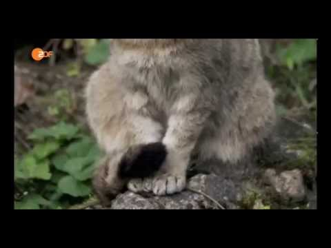 Geschichte Der Tiere - Die Katze