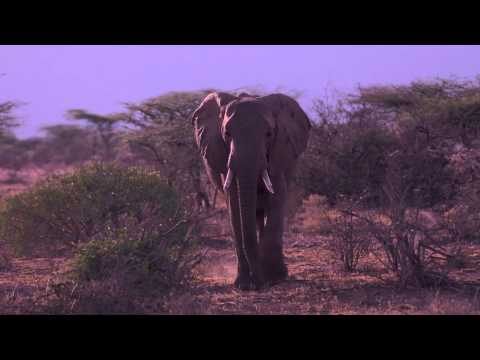 Chelsea Clinton Explains Why You Should Care About Elephants