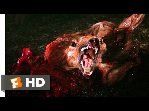 The Thing Movie Clip - watch all clips http://j.mp/z1c3bY click to subscribe http://j.mp/sNDUs5 While locked up in the dog kennel, the Thing attacks Clarks' ...