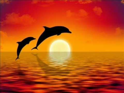 Relajación y equilibrio con Delfines, Meditación guiada Video