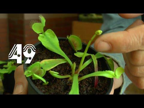 Die Sämlinge und wie geht es weiter mit den Exoten und anderen Pflanzen Teil 49