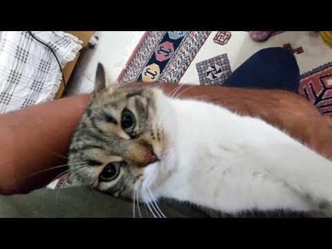 Kedicikler paticik ve alina için ilaç ve yeni tasma vakti , çocuk videosu