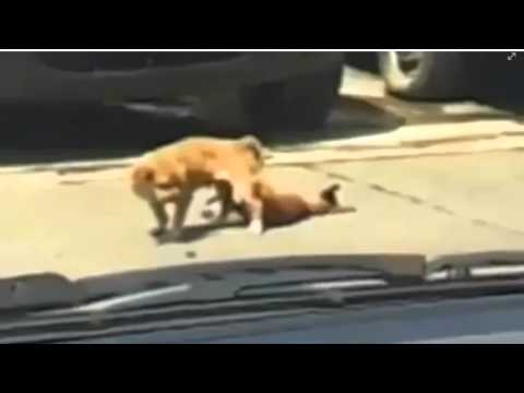 Perrito muere SINGANDO