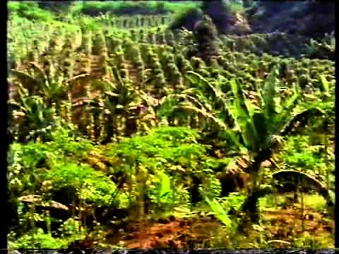 The Spice of Life - Pepper: The Master Spice - BBC production narrated by Edward Woodward