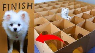 Snowball Dog Hugo Hamster And Corn Kittens Running In Castle Maze