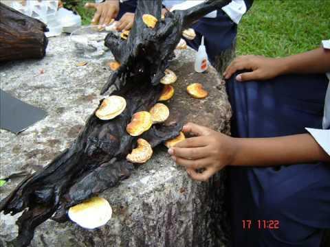 การประดิษฐ์เห็ดเกาะขอนไม้