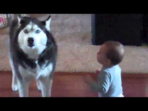 Dog imitates baby