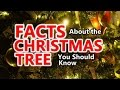 FACTS About the CHRISTMAS TREE You Should Know !!!
