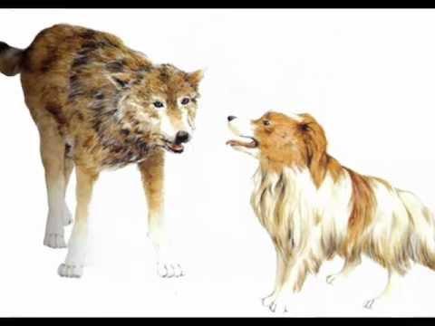 5. El lobo