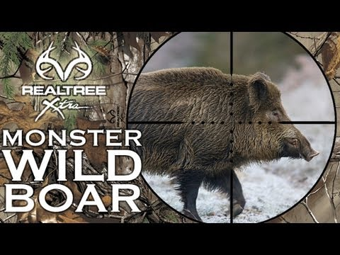 Monster Wild Boar Hunting In Hungary video
