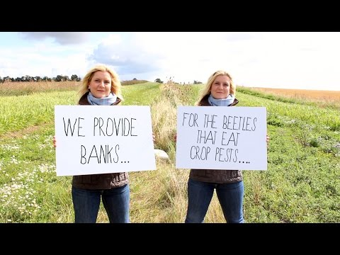Back British Farming: How Farmers Protect The Environment