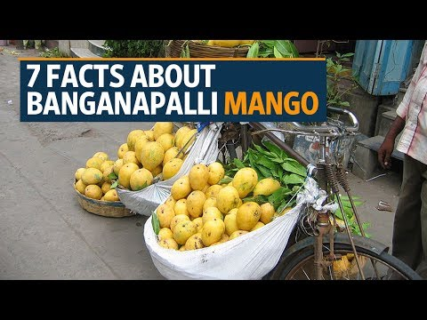 Andhra Pradesh's Banganapalle mango gets Geographical Indication tag