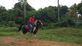 Srikanth Horse Riding Mysore