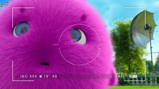 Sunny Bunnies   The Magic Camera   COMPILATION   Videos For Kids