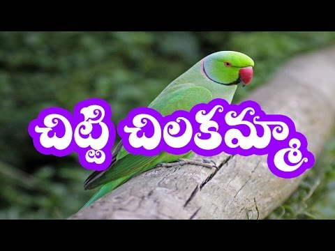 Chitti Chilakamma Parrots 3D Animation Telugu Rhymes for children with lyrics  by kp3d rhymes