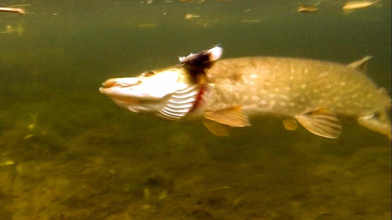 видео рыбалка на мертвую рыбку видео