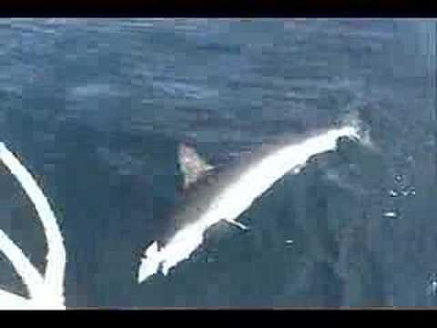 Hammerhead Shark Fishing Long Island NY
