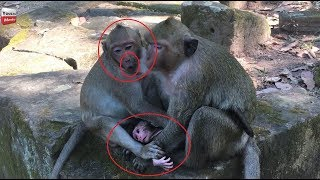 OMG No do that Sweetpea/ Spoil Kills New Born/ Dana Pity hers but scared Youlike Monkey