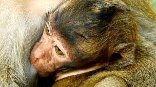 Mommy Brinn Is The Best Mother For Little Baby Bree, Taking Care Very Well Of Her Baby, Really Gr