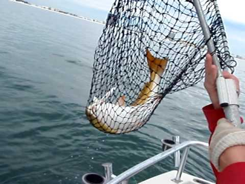 Bull Redfish Fishing Season in Orange Beach