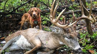 HOW TO RECOVER YOUR DEER - Professional Tracking Tips with Doug Fink