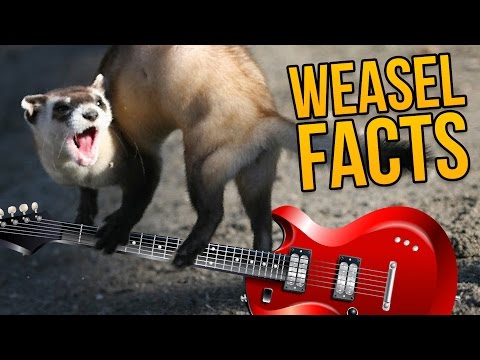 Revolver - Weasel Song