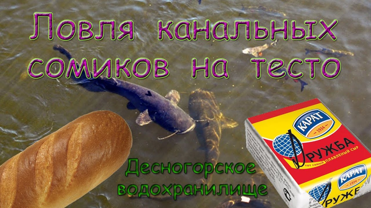 ловля на хлеб и тесто рыбы
