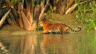 World largest mangrove Forest........SundorBon
