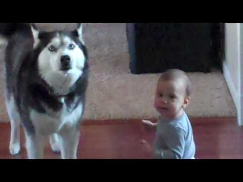 Husky sings with baby