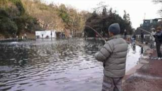 管理釣り場のフライフィッシング Area Fly Fishing in Fuji-Susono Fishing Park.mpg
