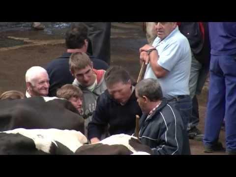 Feria de ganados - Torrelavega - Ferial de ganado