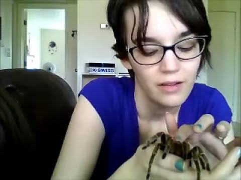 Vlog of AWESOME: Understanding Tarantulas as Pets