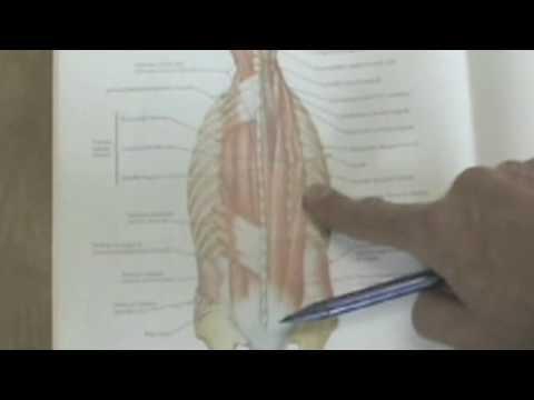 body by science doug mcguff pdf