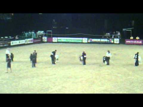 Horse of the Year Show 2011 Miniature Horse championship