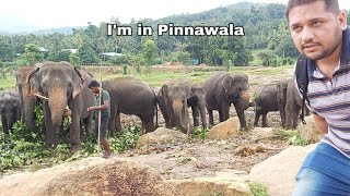 Elephant dot sick at pinnawala,   full video  hsn Entertainment