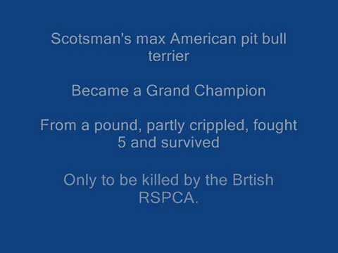 Game dogs of the British Isles  www.game-bred.com