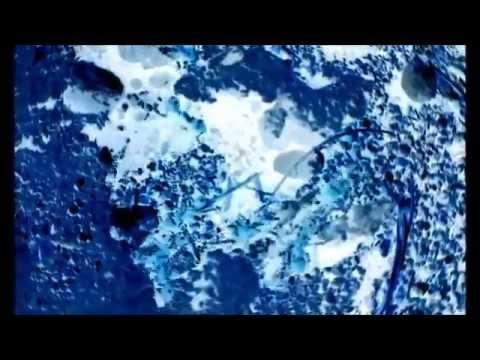 Antarctica Ants