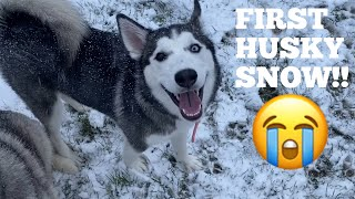 Husky Puppies Priceless Reaction To Seeing Snow For First Time! [TRY NOT TO SMILE]