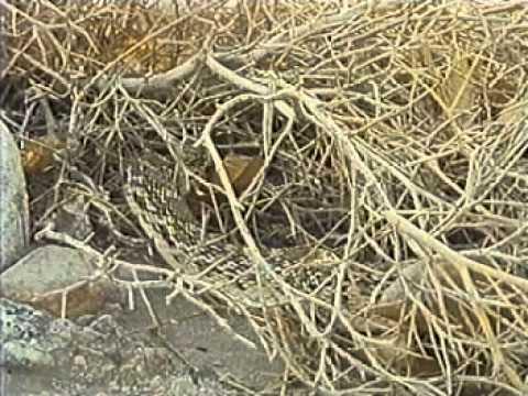 Predadores Selvagens - Cobras
