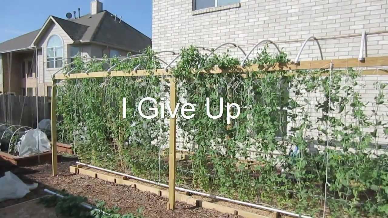 Mittleider Gardening I Give Up I Quit It S Over Youtube