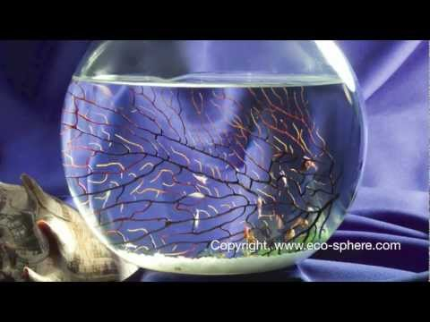 Ecosphere - Self Enclosed Ecosystem video