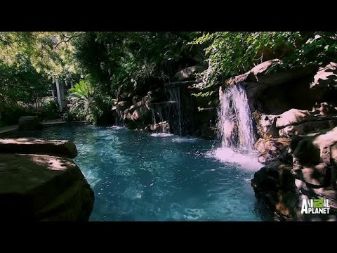 A pool that emulates nature the pool master youtube for Pool show tv