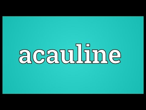 Header of Acauline