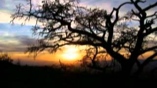 Watch Bob Dylan Copper Kettle video