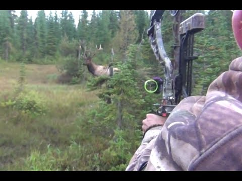The best archery shots on video  bowhunting   StuckNtheRut